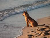beach-87817_640